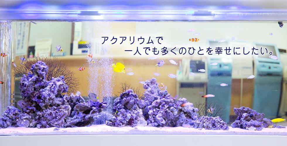 アクアリウムセラピー「蔵」 宮崎県都城市のメンテナンス付きレンタル水槽サービスです