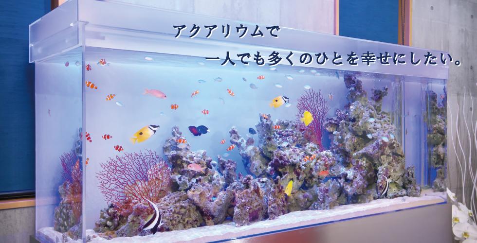 アクアセラピー「蔵」 宮崎県都城市のメンテナンス付きレンタル水槽サービスです